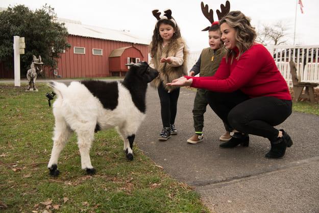 Enjoy some family fun on a farm park field trip!